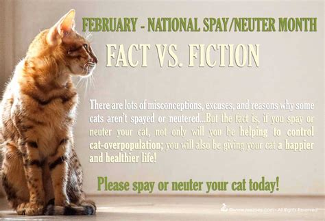 when to neuter a debunking the misconceptions excuses and reasons why don t spay or neuter