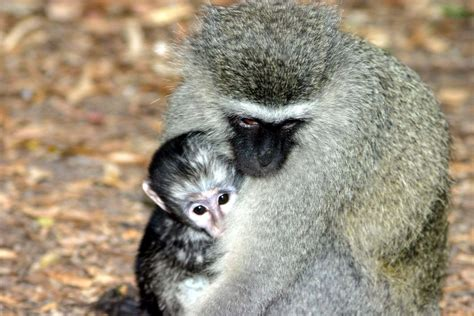 monkey and a z of animals part 24