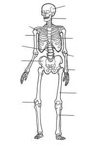 anatomy of a bone coloring kleurplaten en zo 187 kleurplaat het skelet