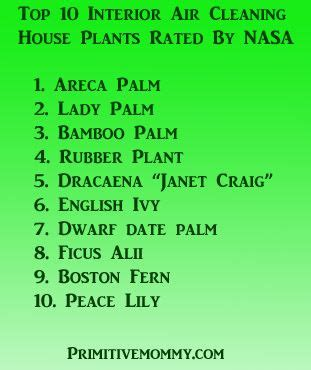 top  air cleaning house plants rated  nasa plants