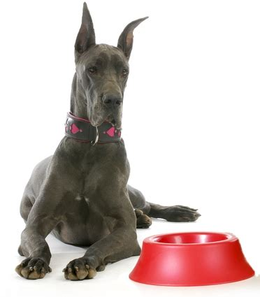 best food for great danes best food for great danes 6 vet recommended brands