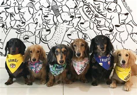 stores that allow dogs singapore stores to get pet friendly bandanas perropet