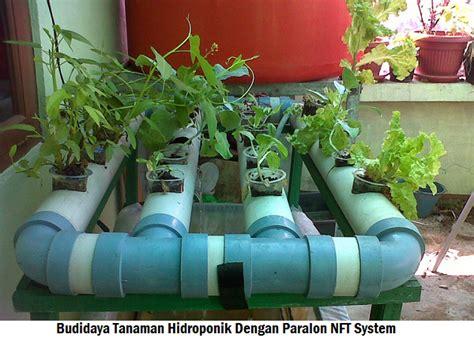 Pipa Paralon Untuk Tanaman Hidroponik budidaya tanaman hidroponik dengan paralon nft system