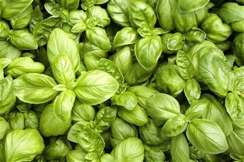 Supérieur Pot Pour Plante Aromatique Interieur #3: 9p4ut4t3t5c8ggkk0wkskcwcg-source-9229033.jpg