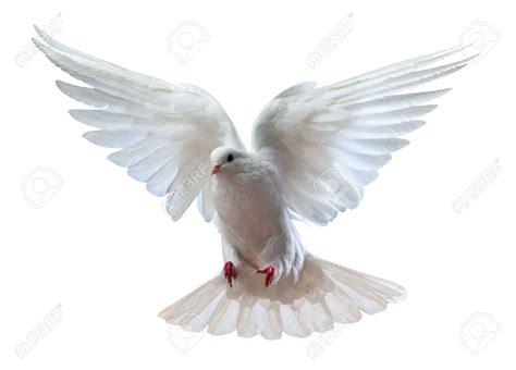imagenes de palomas blancas en vuelo paloma