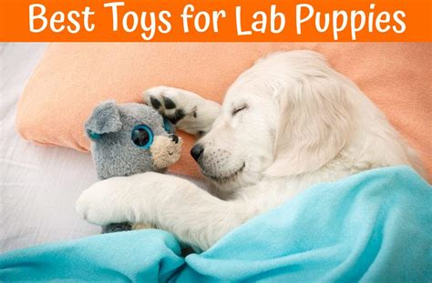 best food for lab puppies best toys for lab puppies us bones
