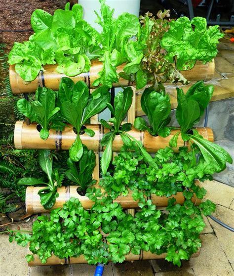 gambar  ide kebun taman vertikal pot tanaman hias