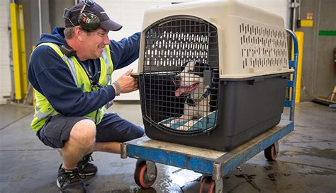 animaux de compagnie en cage westjet