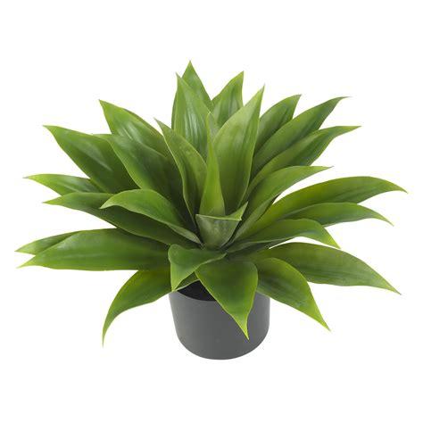 silk plants agave silk plant