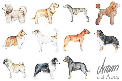 illustrationen und portraits hund malen lassen