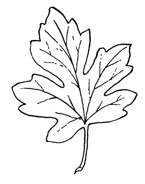 Leaf White leaf clipart black and white pencil and in color leaf