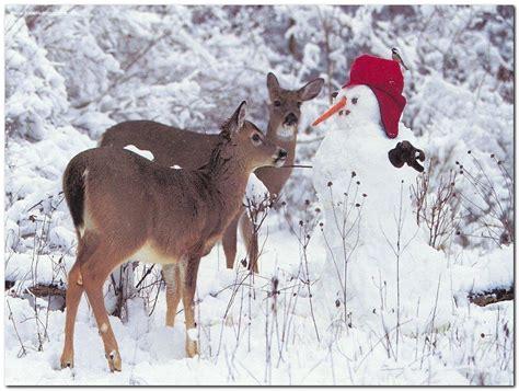 christmas wallpaper with animals christmas animal wallpaper wallpapersafari