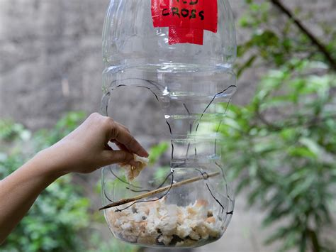 How To Make A Bird Feeder How To Build A Milk Jug Bird Feeder 12 Steps With Pictures