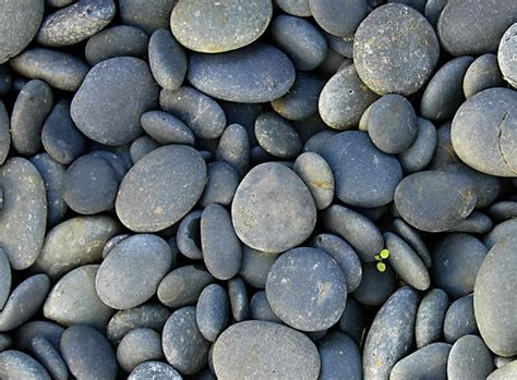 With Rocks rocks been alive this whole time and they are pissed