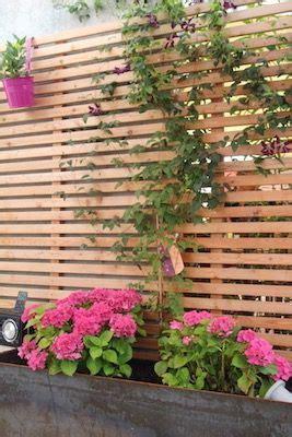 Immergrüne Pflanzen Sichtschutz 2396 by Mit Clematis Berankter Sichtschutz Und Pinken Hortensien