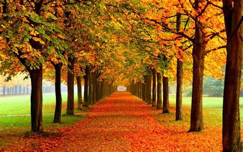 fall leaves filled  autumn landscape autumn leaf