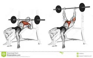 bench press pull up superset exercising press of a bar lying on an incline be stock