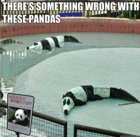 Funny Panda Memes - panda meme memes