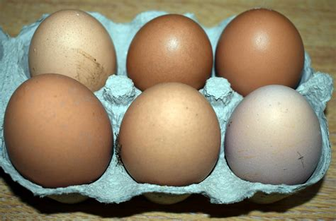 why are eggs different colors why do eggs different colours sacrewell