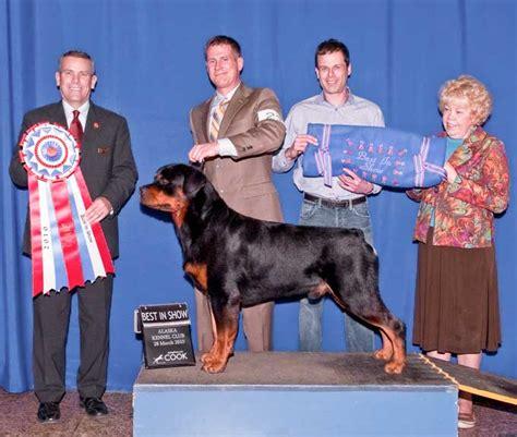 rottweiler club of alaska dogs helo riverridge rottweilers