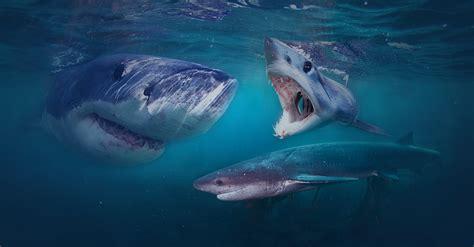 apex dive great white shark cage diving apex shark expeditions