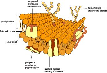 topic  membrane structure amazing world  science