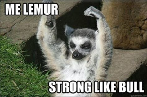 Lemur Meme - pinterest the world s catalog of ideas
