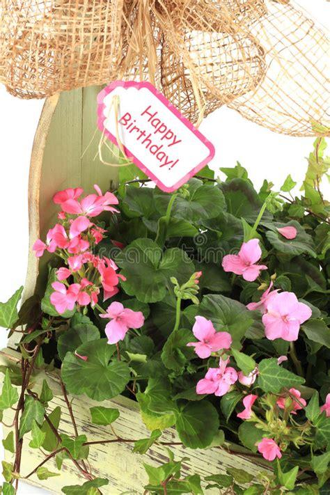 foto di fiori per compleanno immagini di fiori di buon compleanno uk41 187 regardsdefemmes