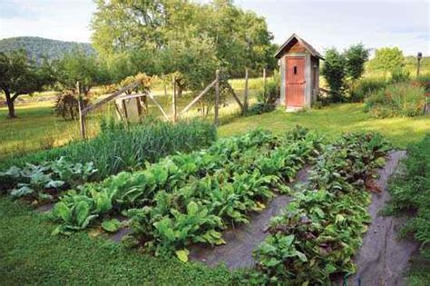How To Garden Vegetables Top Organic Vegetable Gardening Challenges And How To
