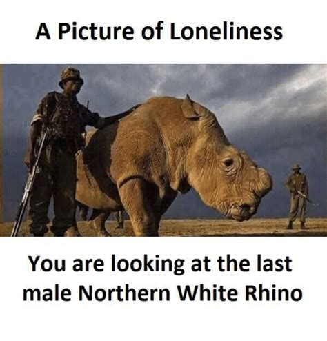 Rhino Memes - a picture of loneliness you are looking at the last male