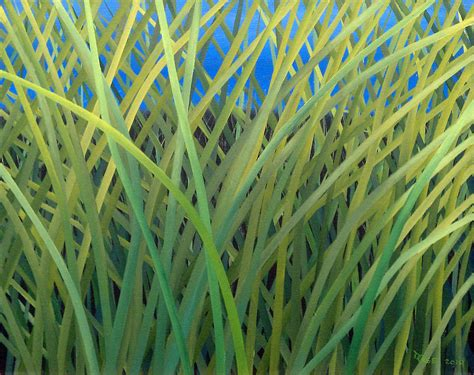 acrylic paint grass grass 27 painting by douglas