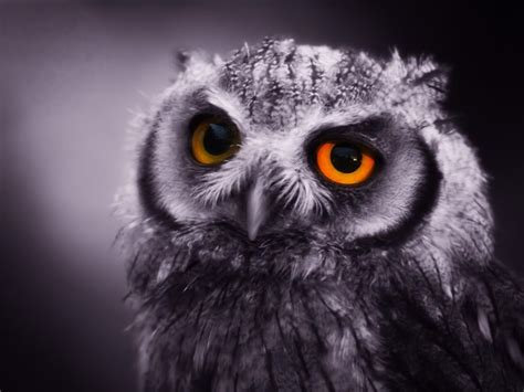 addicted to genre bending night owls and sci fi and fantasy blog awards