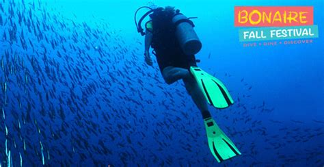 bonaire dive dive bonaire this coming fall deeperblue
