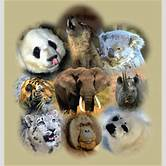 endangered-species-of-animals-in-the-world