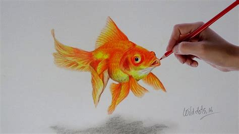gold color pencil gold fish a realistic drawing with simple colored