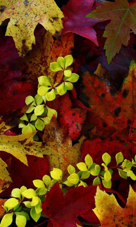 Autumn Equinox Wallpaper autumnal equinox wallpapers android apps on play