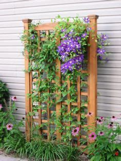 trellis designs climbing plants using trellisto provide a frame for climbing plants and vines