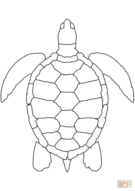 turtles coloring sea turtle coloring page free printable coloring pages