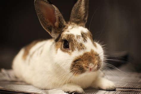 Gantungan Bunny Kopenhagen Bunny 1 bunny rodeo benefits farm cares the fuze magazine