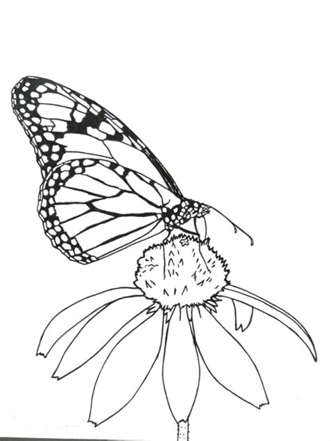 coloring page for monarch butterfly great monarch activities for kids wild ones