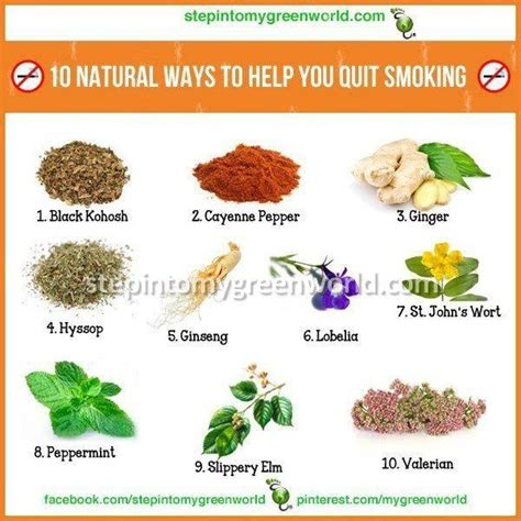 Best Way To Detox Your From Nicotine by 17 Best Images About Healing Herbs Plants Spices And More