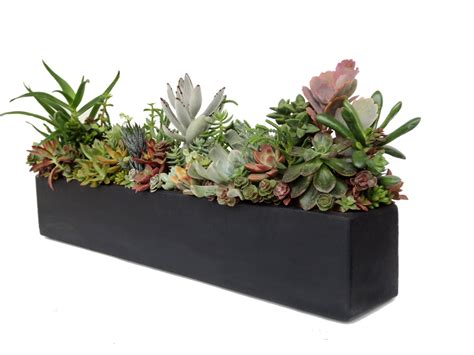 succulent planter succulent arrangement concrete centerpiece 24 quot black