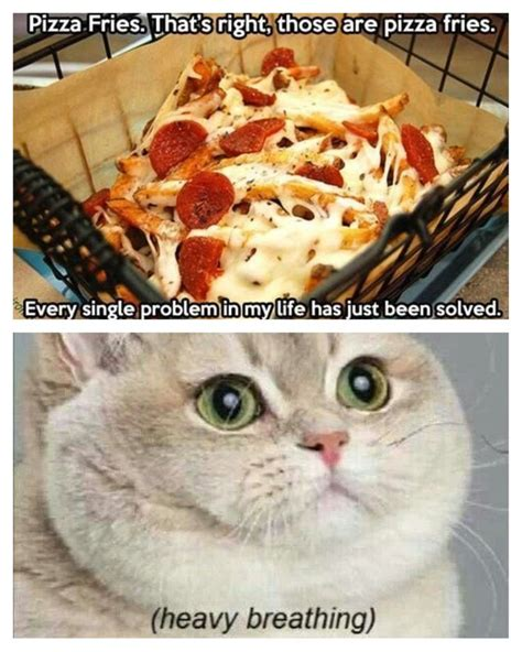 Fat Cat Heavy Breathing Meme - 25 best ideas about heavy breathing cat on pinterest