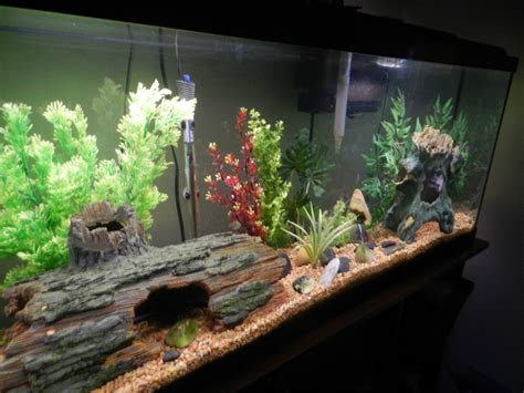 aquarium decoration ideas freshwater how to change the water in your freshwater aquarium the