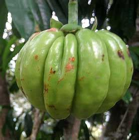 where can i buy supreme strongest garcinia cambogia where can i buy supreme