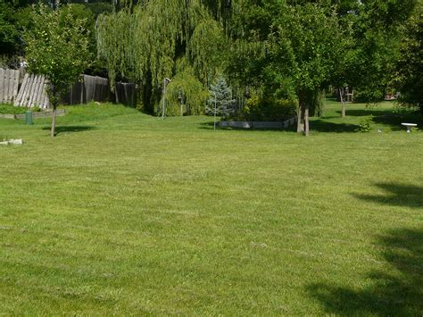 in our backyard transforming our lawn into a living laboratory the old