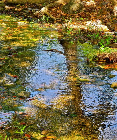 After Reflections by After Monet Or Reflections In The Photograph By