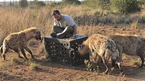 hyena vs killer iq vs hyena terra mater factual studios