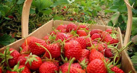 Jual Benih Strawberry Bandung 10 tempat wisata di bandung selatan yang menarik terkenal