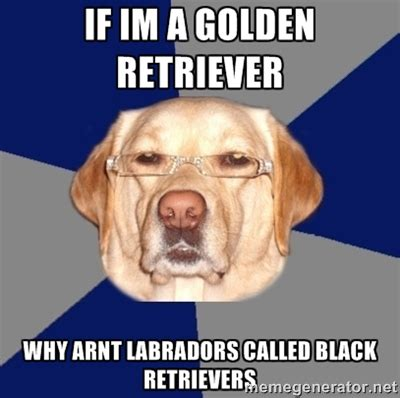 golden retriever memes golden retriever memes image memes at relatably